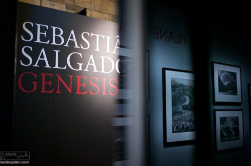 World premiere of Sebastiao Salgado's Genesis Exhibition at the Natural History Museum in London, UK. April 09, 2013. Photo: Edmond Terakopian